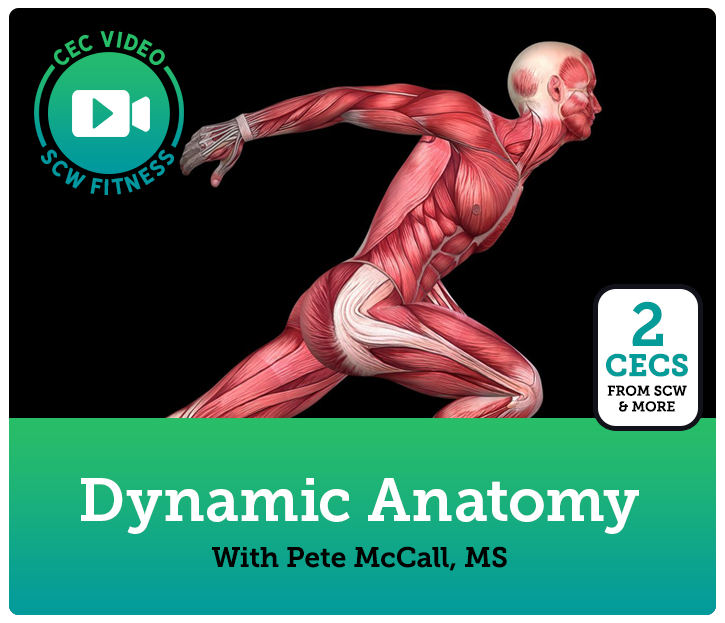 CEC Video Course: Dynamic Anatomy: Core/Upper Body | SCW Fitness ...